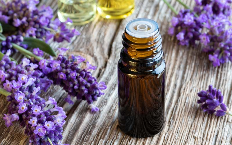 LAVENDER-OIL-FOR-DANDRUFF